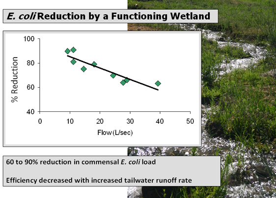 Less pollutant load was filtered at high runoff compared to low runoff (flow)